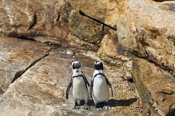 Port Elizabeth Safari