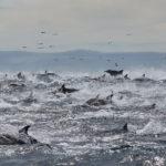 Port Elizabeth Safari: Raggy Charters & Schotia