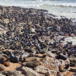 The Namibian coast: Walvis Bay and Henties Bay