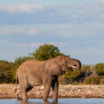 Our experience about camping in Etosha