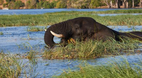 Chobe River