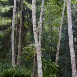 A true forest in Tanzania