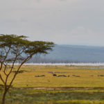 The beautiful landscapes of Lake Nakuru National Park