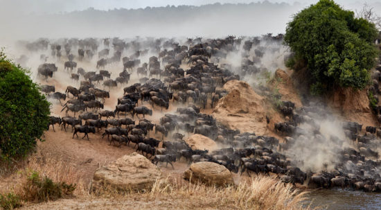 Great Migration Africa