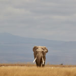 Video Amboseli National Park