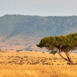 The spectacular wildlife and scenery of the Mara Triangle