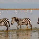 Amboseli: Dieren spotten bij de Kilimanjaro