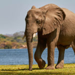 Living in the bush: Paradise on the Zambezi