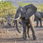 Amazing wildlife in Kruger National Park video