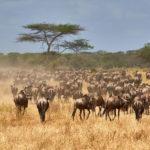 Tips voor je self drive vakantie naar Tanzania