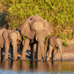 24 hours in the popular Kasane - Botswana