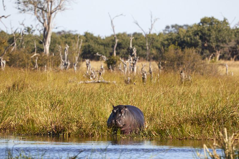 Botswana campsites