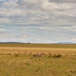The Fascinating Wildlife In The Masai Mara