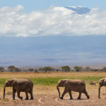 Amboseli National Park Video