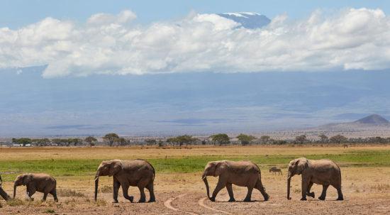 Amboseli Nationaal Park