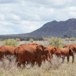 The colourful wilderness of Tsavo West