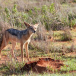 Tsavo East National Park Video