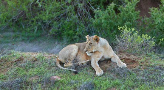 Tsavo East Nationaal Park