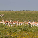Best camping in and near Etosha